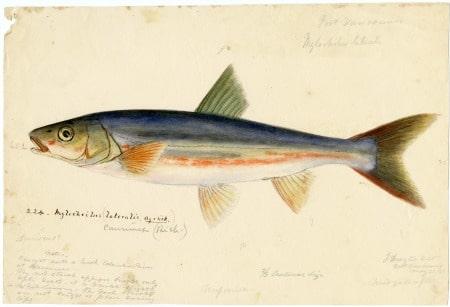 fisk og fiskeolie